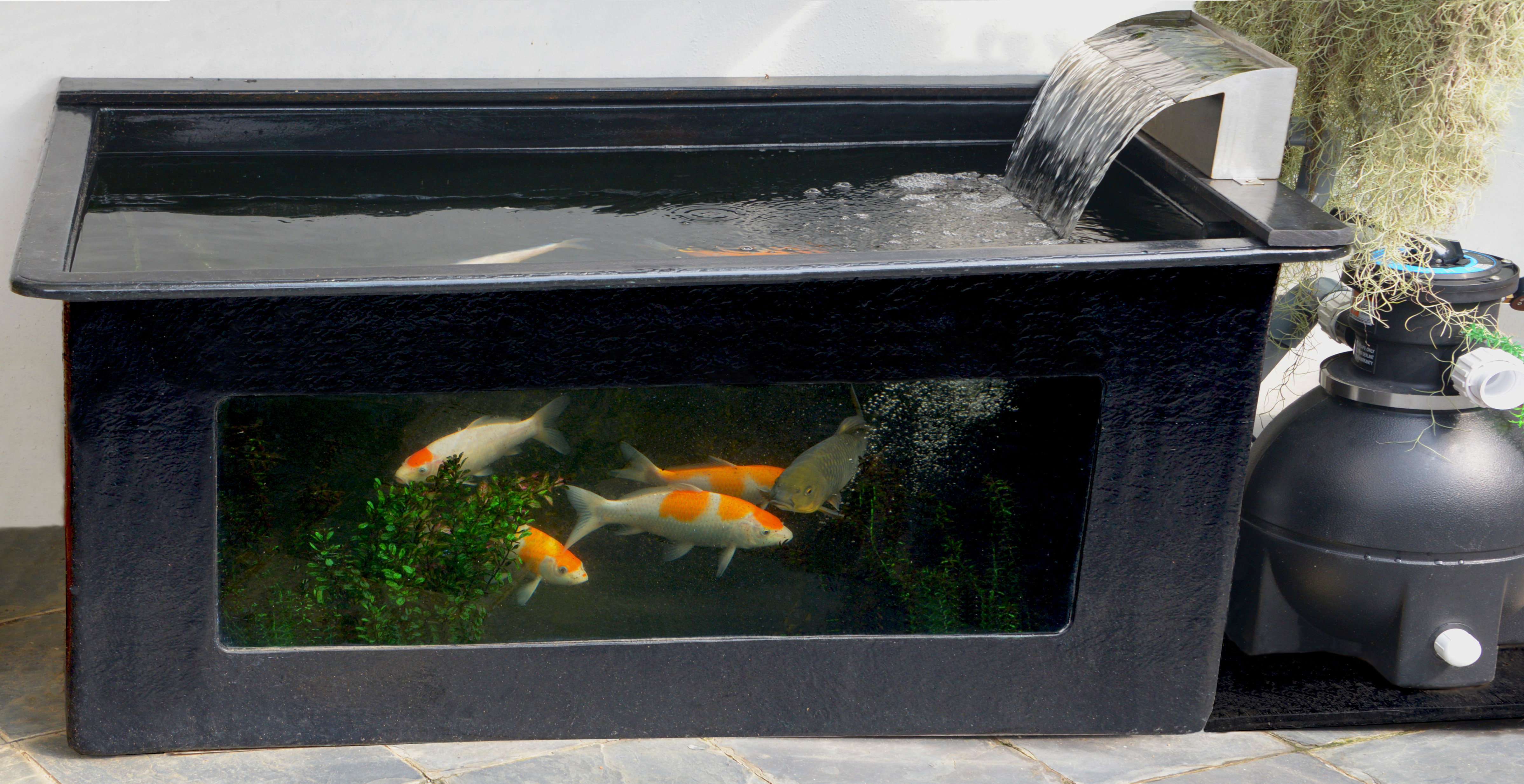 Koi pond for Koi pond glass