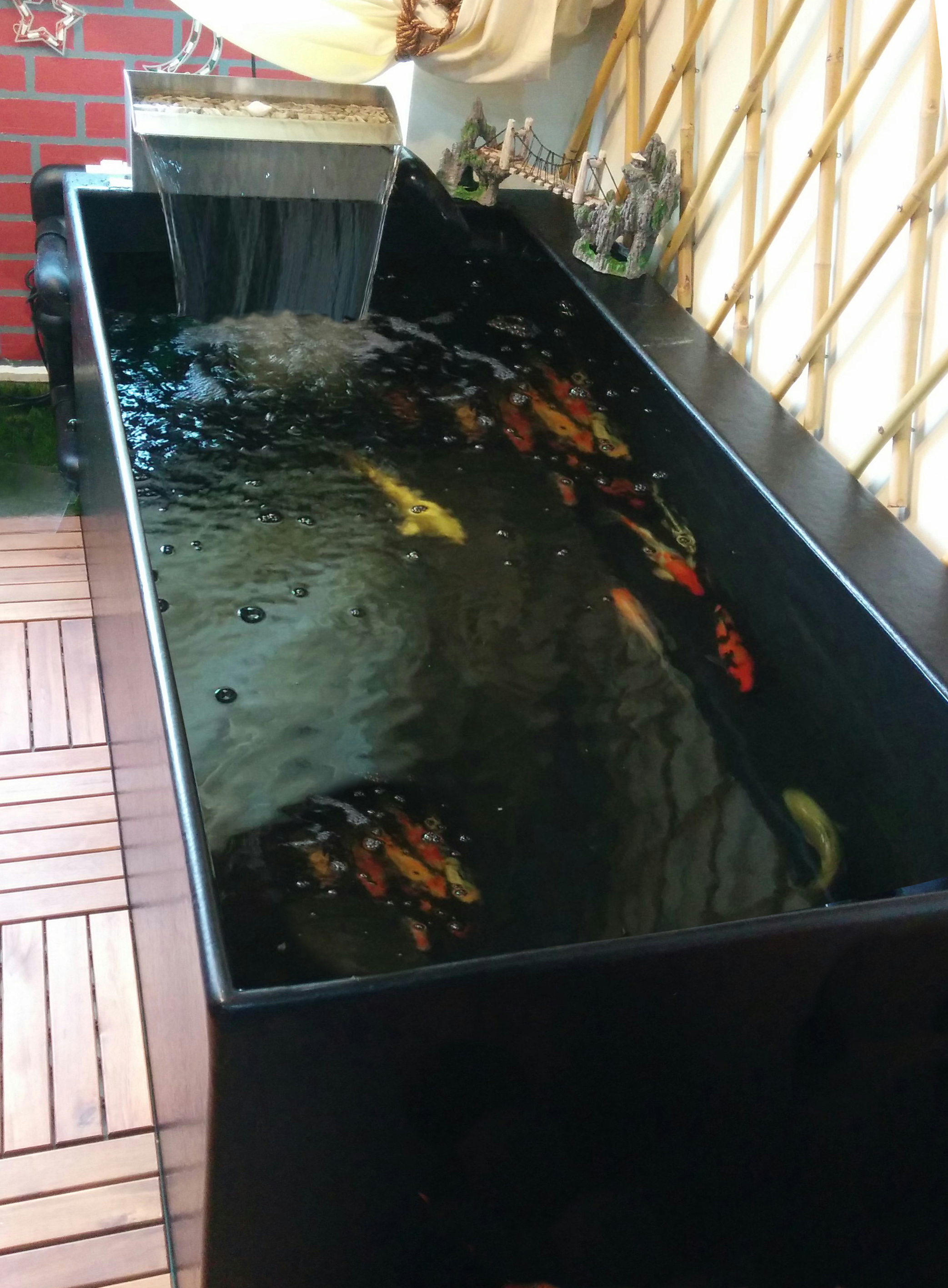 koi pond allows room for koi to grow