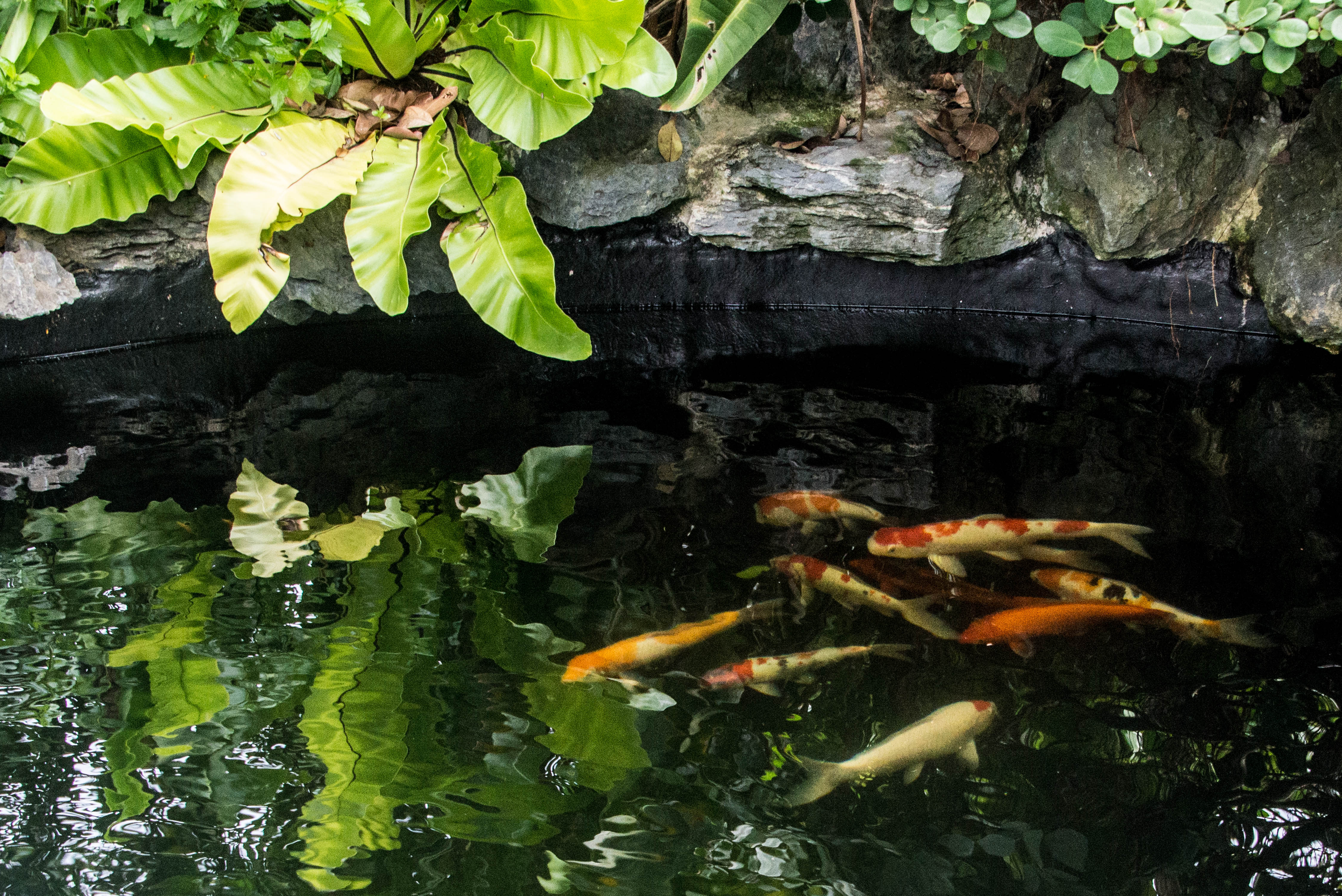 Koi pond basics 101 what you need to know for What do you need for a koi pond